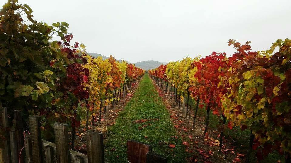 Jesenná vínna ulička v podani Karpatskej mušky